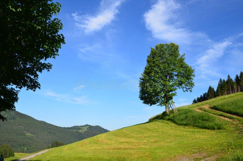 hillside images stock