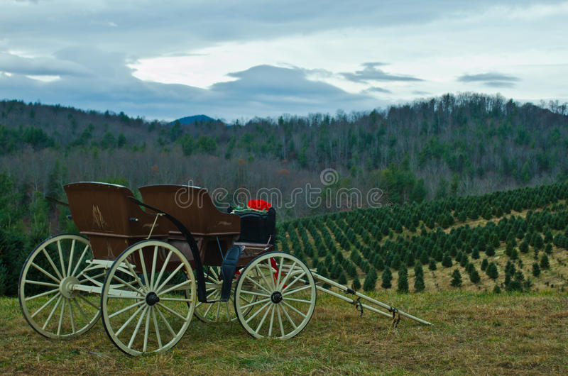 Hillside Carriage. A carriage overlooks a field of Christmas trees waiting to be taken home royalty free stock images
