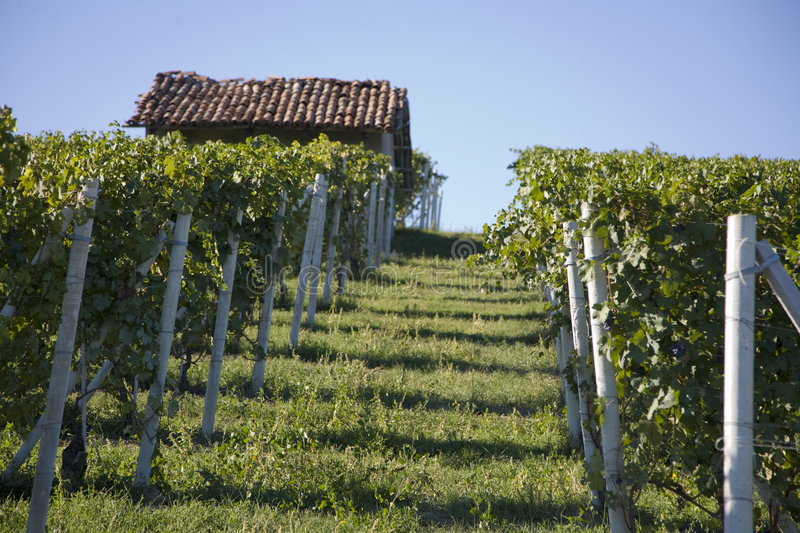 Download Hillside in Piemonte stock image. Image of meadows, countryside - 5824963