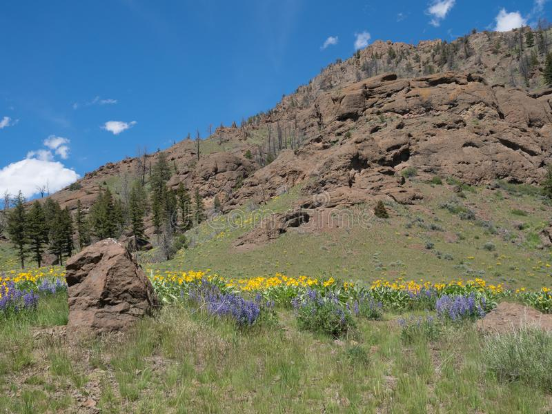A Hillside with Purple and Yellow Wildflowers with a Rocky Cliff stock photography