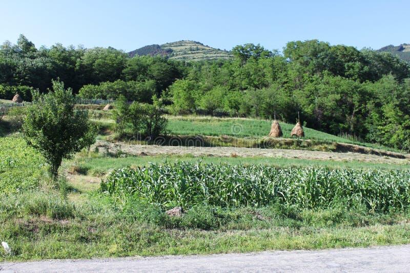 Download Hillside rural landscape stock image. Image of landscape - 25919321