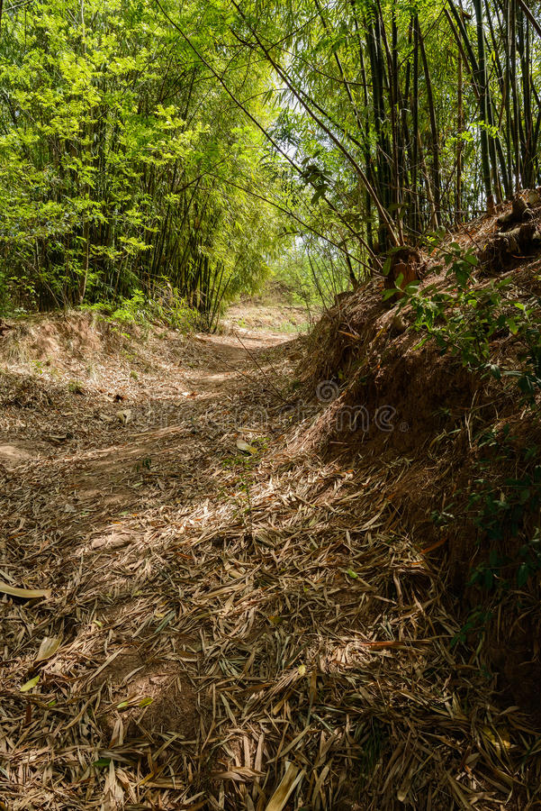 Hillside shaded footpath in bamboo on late spring day. Hillside shaded footpath in late spring bamboo stock image