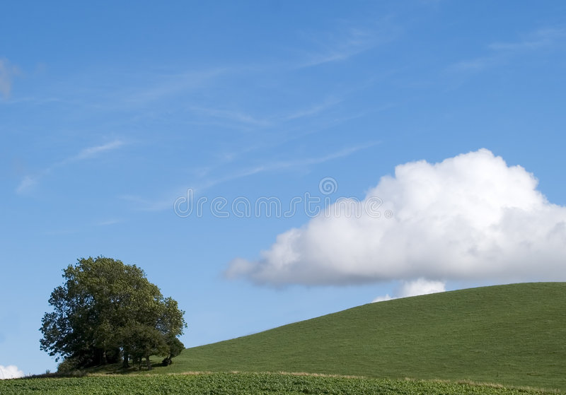 Download Hillside Tree stock photo. Image of green, meadow, blue - 175836