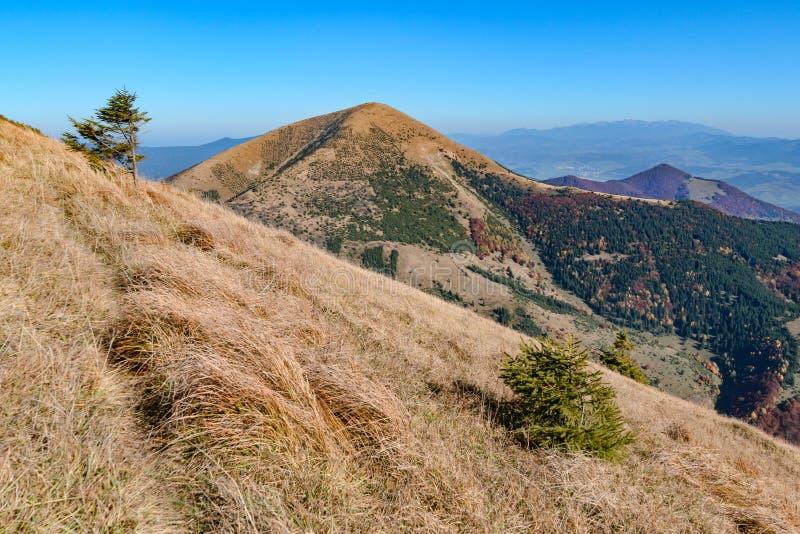 The hillside in Vratna valley at the national park Mala Fatra, Slovakia. Sunny day royalty free stock image