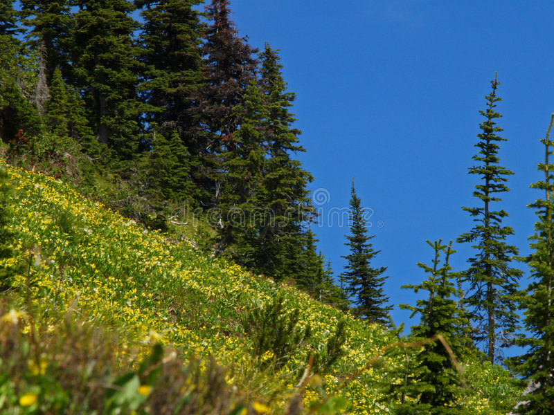 Hillside Wildflowers royalty free stock photography