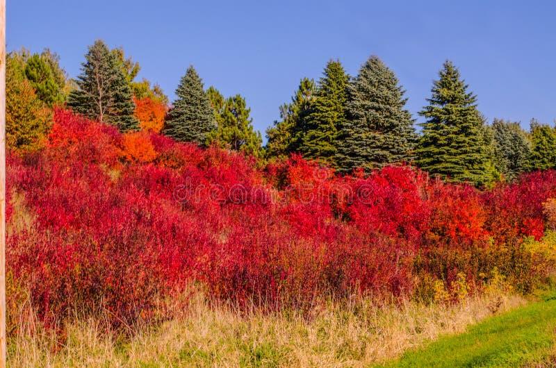 Hillsside van dramatische kleur stock foto's