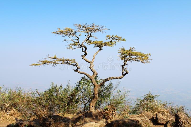 Hilltop tree alone stock photo