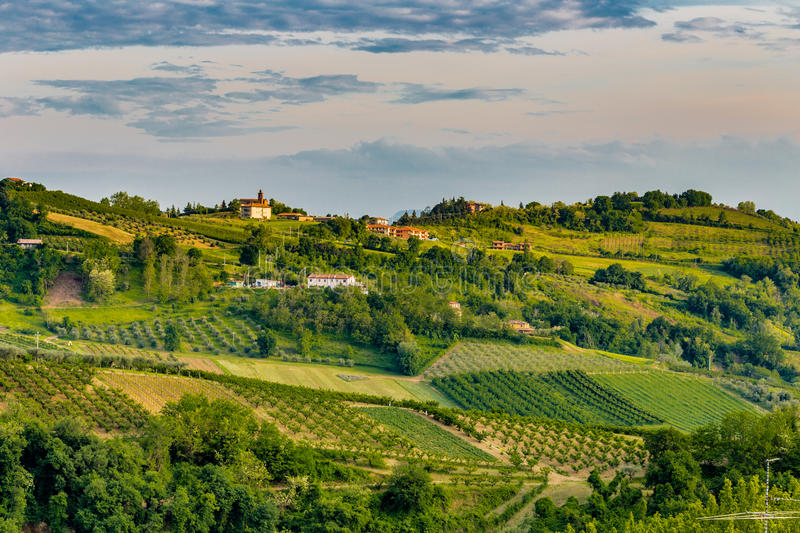 Hilly countryside. The relaxing view of the fields of olive trees and peach trees of the hilly countryside of Emilia Romagna in Italy stock photography