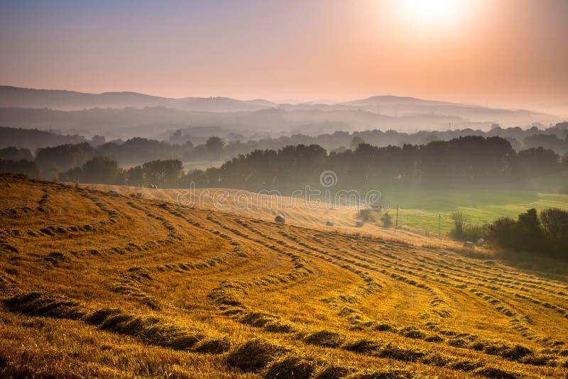 Hilly Farmland Landscape fotografia stock
