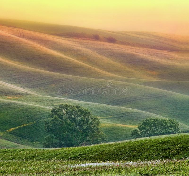 Hilly landscape of Tuscany stock photography