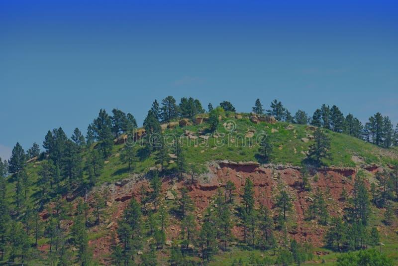 Hilly Landscape van bomen en grassen royalty-vrije stock foto