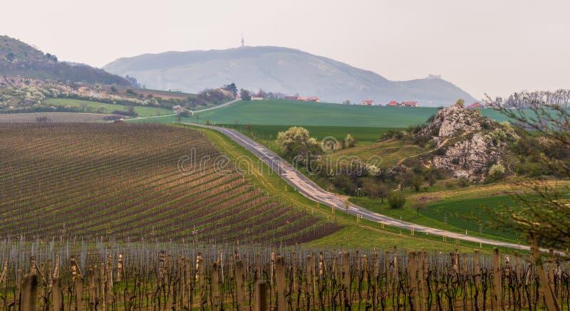 Hilly Landscape van Wijngaarden royalty-vrije stock fotografie