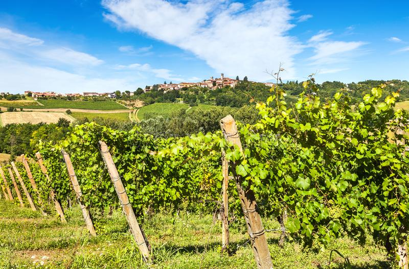 Hilly region of the Langhe with vineyards stock photography