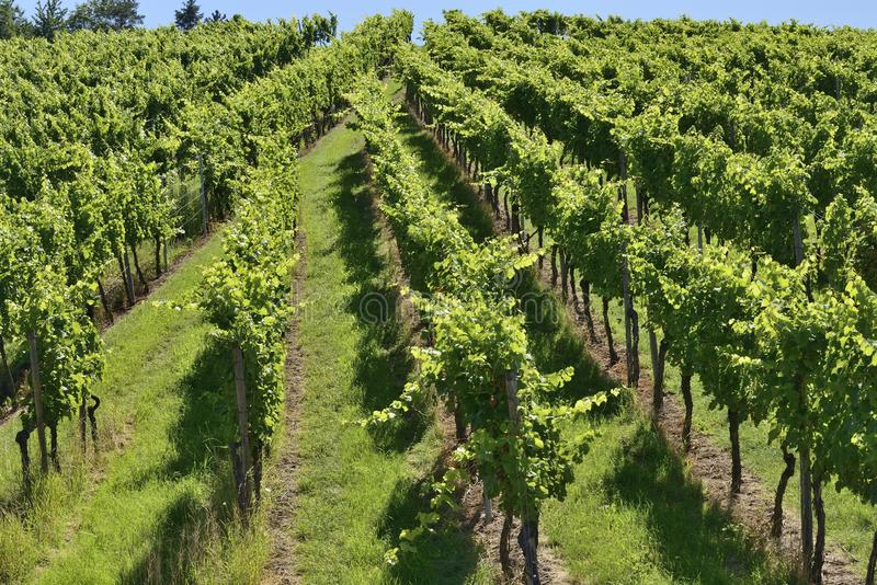 Hilly vineyard #3, Stuttgart stock image