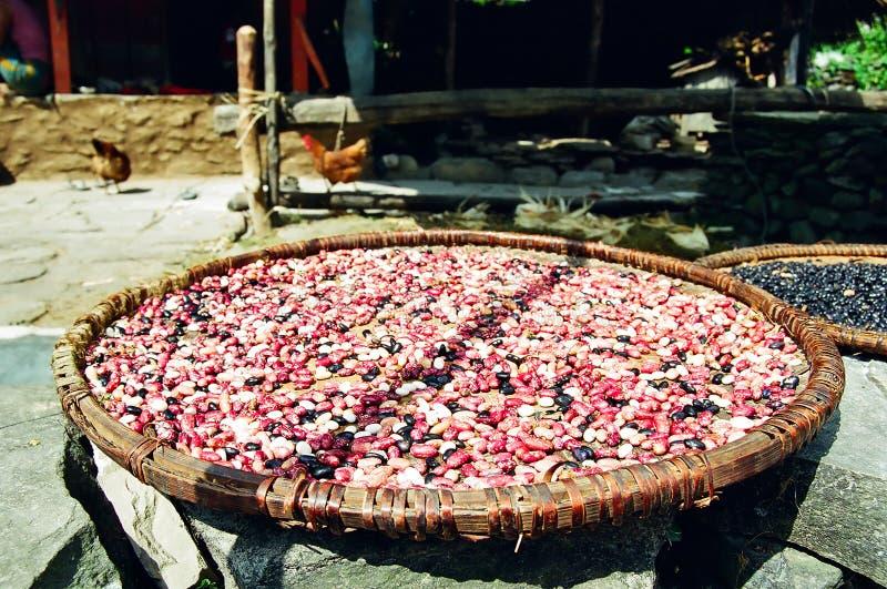 Himalaya Drying Beans, Nepal stock photos