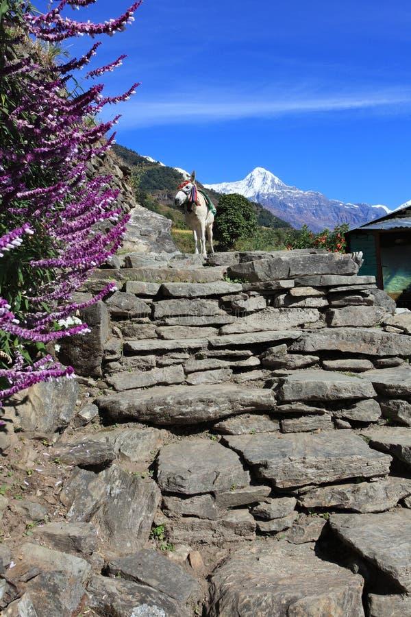 The Himalaya Mountains,Nepal stock image