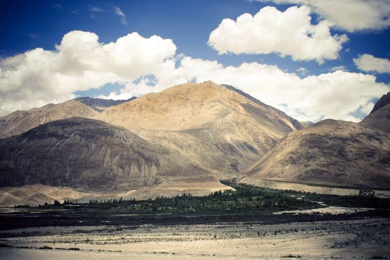 Himalaya, vale de Nubra. imagem de stock
