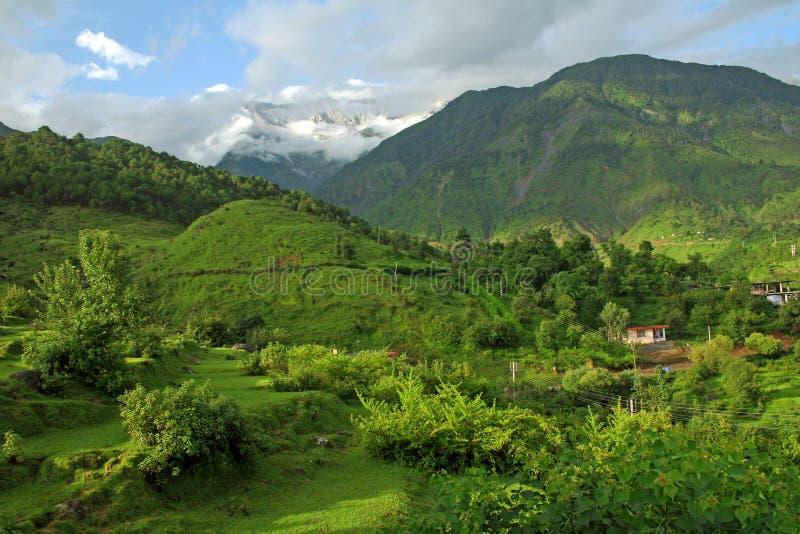 Himalaya verde de la montaña, kangra la India imagenes de archivo
