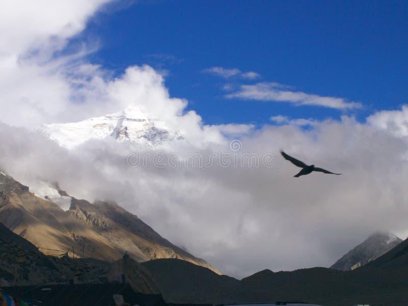 Himalayagebergte en adelaar royalty-vrije stock foto's