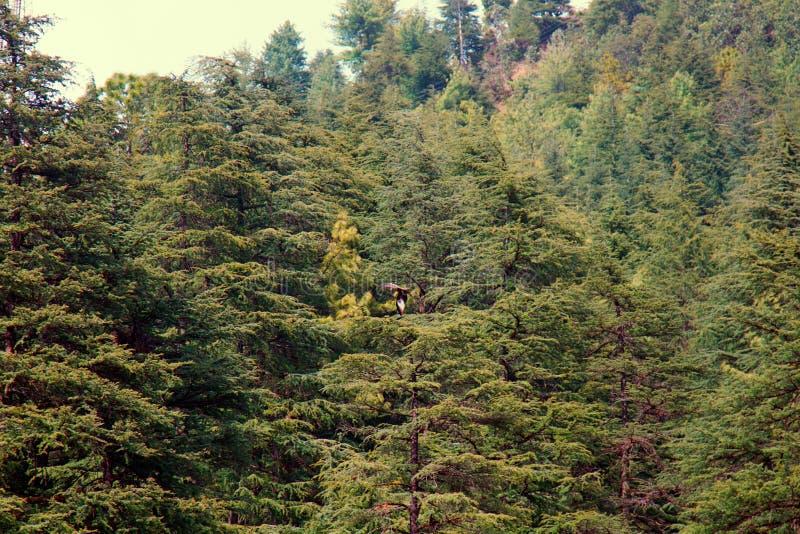 Himalayan forest stock photos