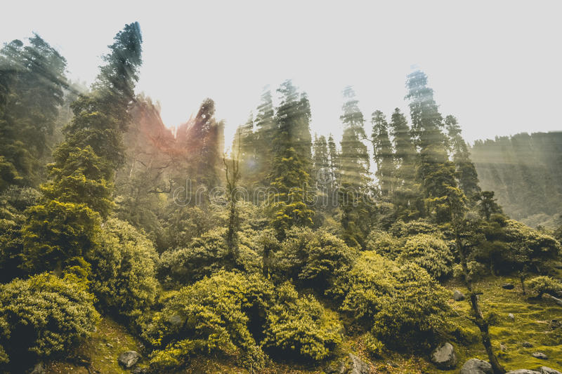 Himalayan Forest with sun rays royalty free stock images