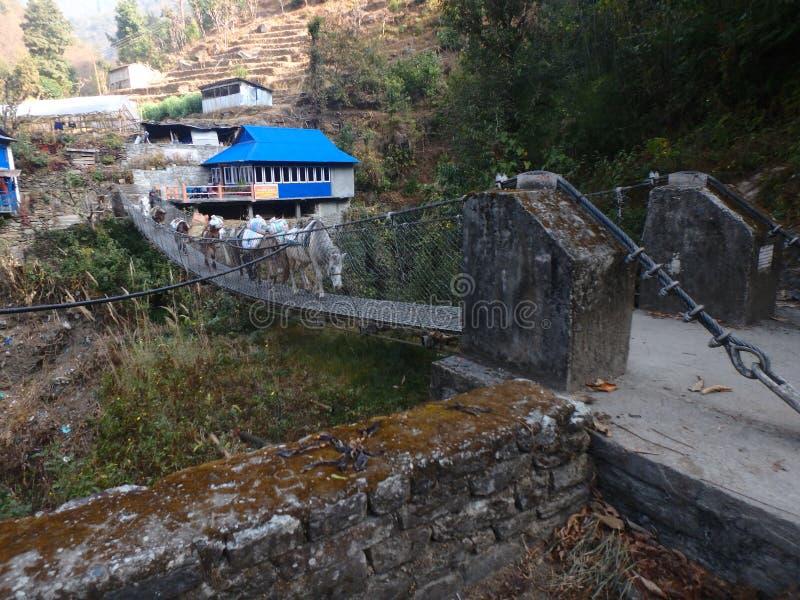 Himalayas for beginners: bridges royalty free stock photo