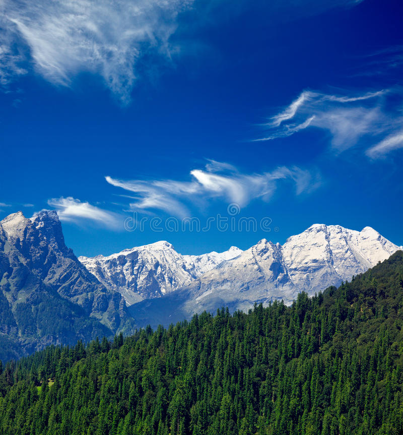 Himalayas and forest. India. Himalayas and forest. Himachal Pradesh, India royalty free stock image