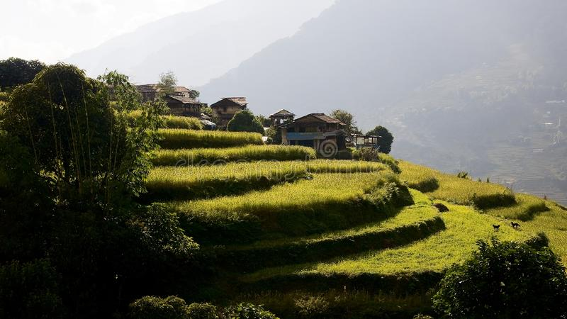 The Himalayas form fields are terraced stock photo