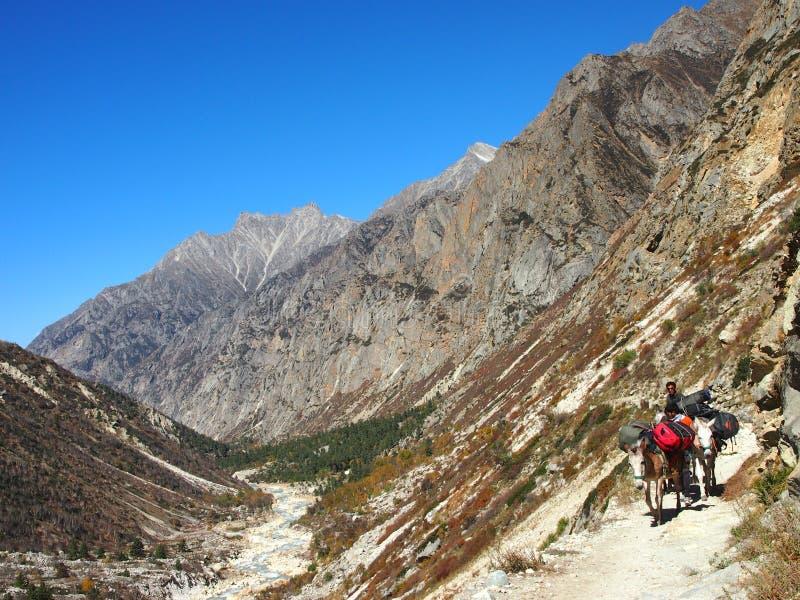 Himalayas sacrais Gangotri imagens de stock royalty free