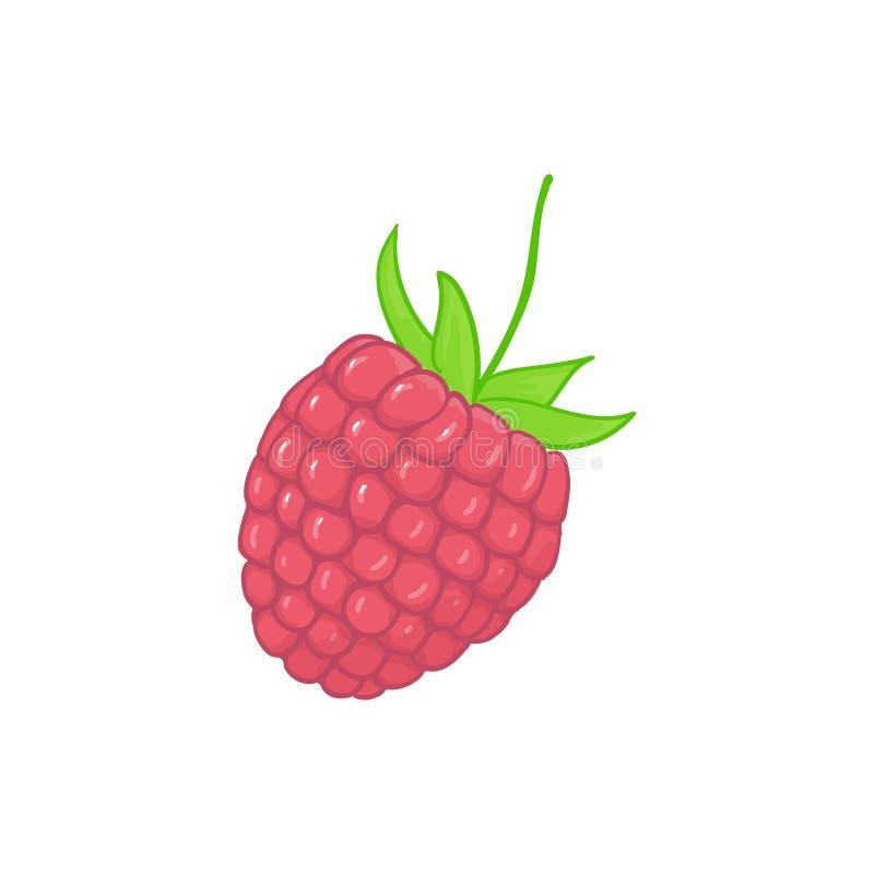 Himbeere Waldrosa Beeren Süße Frucht Sondern Sie getrennt auf Weiß aus vektor abbildung