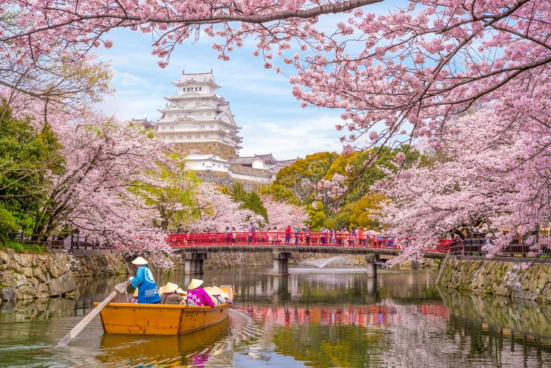 Himeji Castle with beautiful cherry blossom in spring stock images