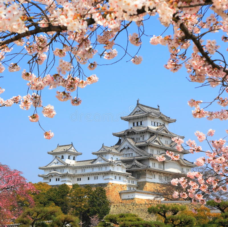 The Himeji Castle, Japan. Spring cherry blossoms and the main tower of the famous Himeji Castle, also called the white heron castle, surrounded by Sakura cherry royalty free stock image
