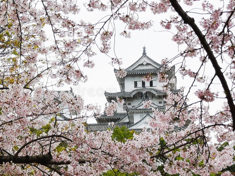 Himeji-Schloss während Sakura stockfotografie