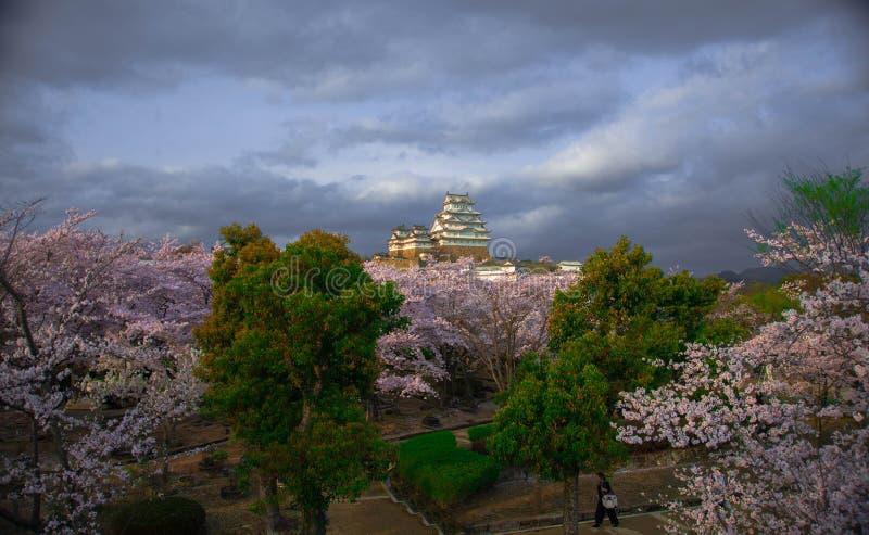 Himeji vit slott och körsbärsröd blomning arkivbild