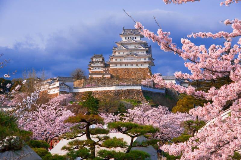 Himeji vit slott och körsbärsröd blomning royaltyfria foton