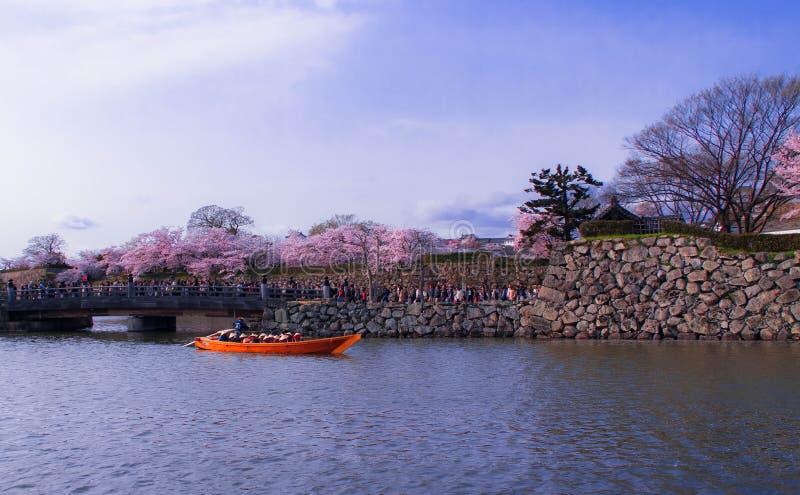 Himeji vit slott och körsbärsröd blomning royaltyfri bild
