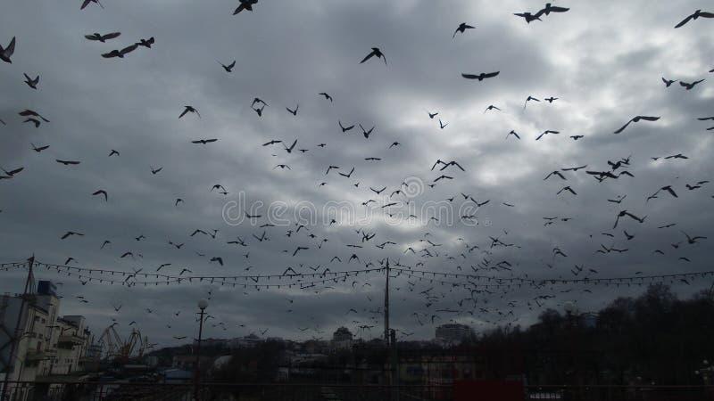 Himlen av Odessa som fylls med fåglar arkivbilder