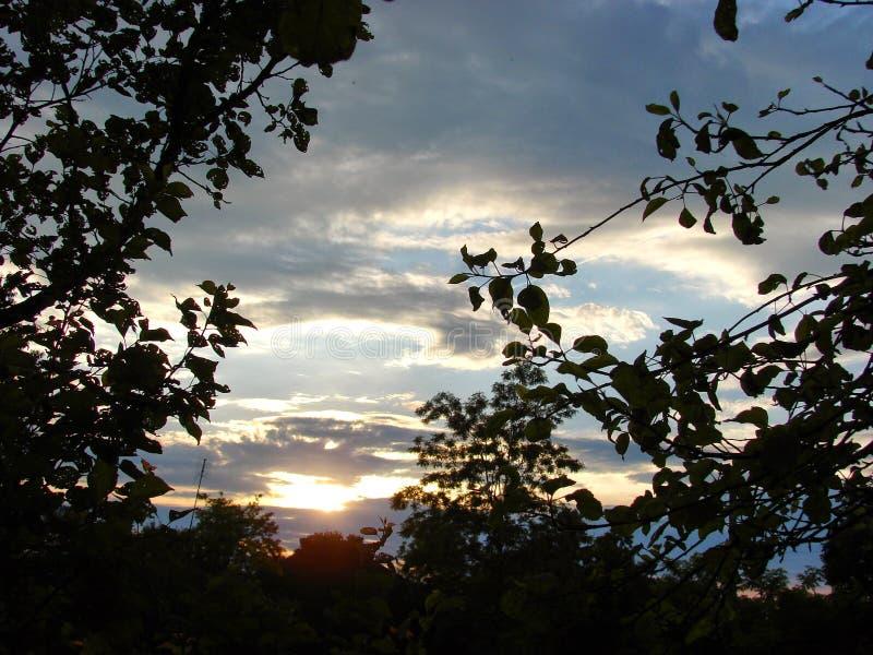 Himlen och träden på skymning royaltyfri fotografi