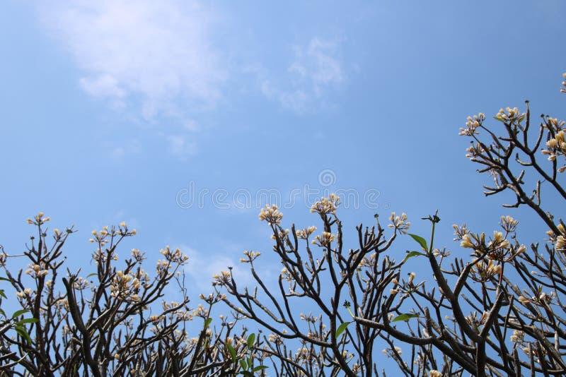 Himlen ovanför blommaträdet royaltyfri foto