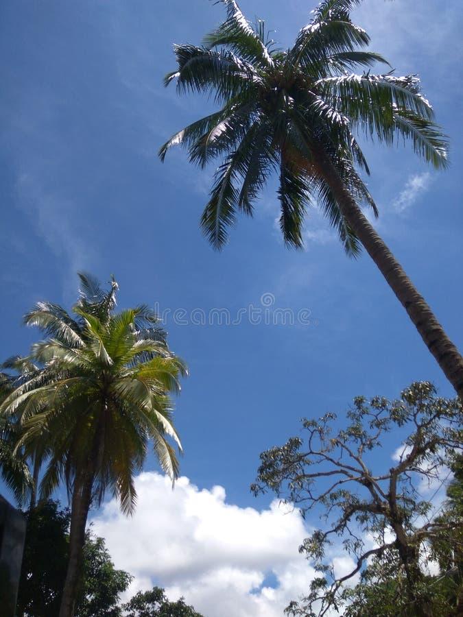 Download Himmel stockfoto. Bild von kokosnuß, blau, baum, himmel - 106800718