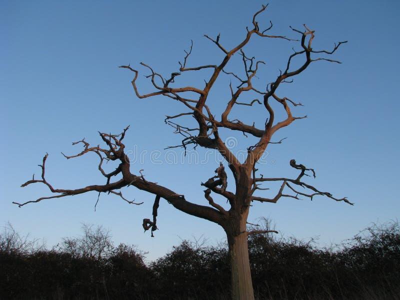 Himmel-Baum stockfotos