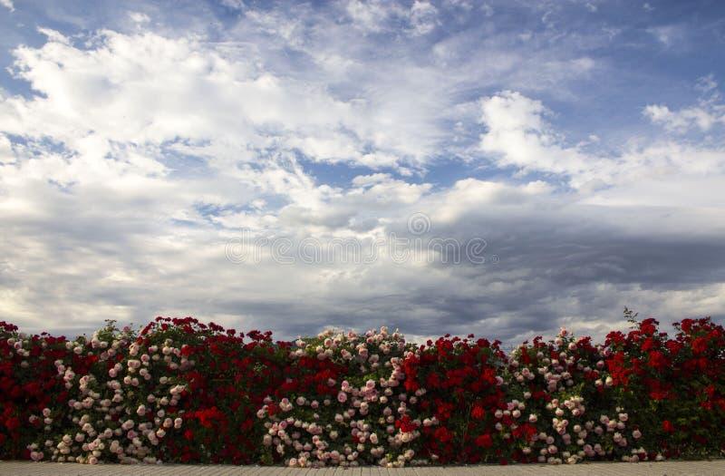 Himmel-Blumen stockfoto