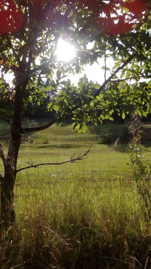Himmel durch Baum lizenzfreie stockfotos