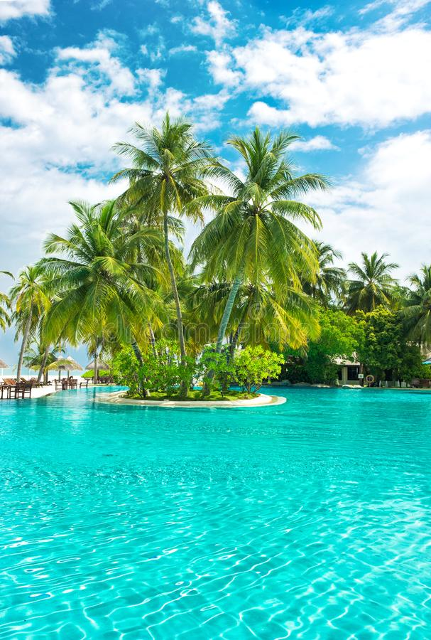 Himmel för palmträd för tropiska växter för simbassäng molnig blå arkivfoto