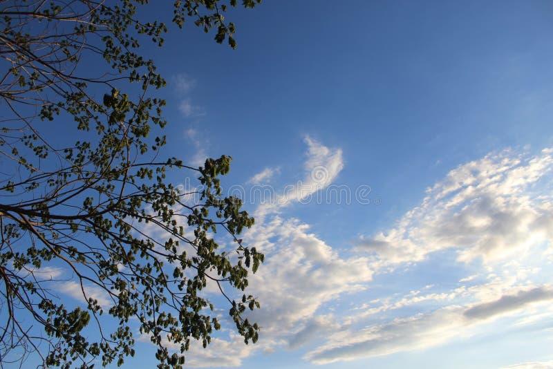 Himmel-Feiertag stockfoto