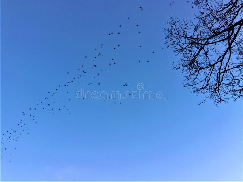 Himmel, flygfåglar, kalt träd, frihet och evighet royaltyfri foto