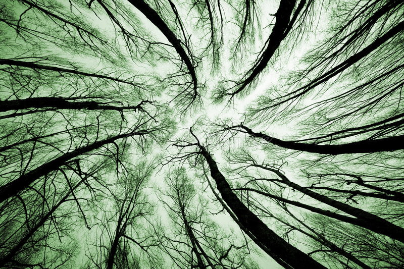 Himmel im Wald lizenzfreies stockfoto