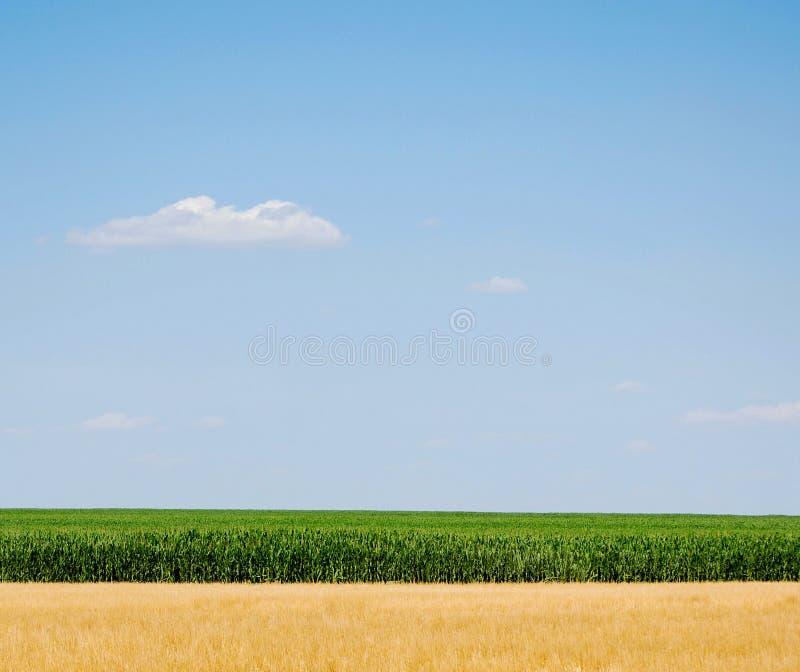 Himmel, Mais und Weizen lizenzfreies stockbild