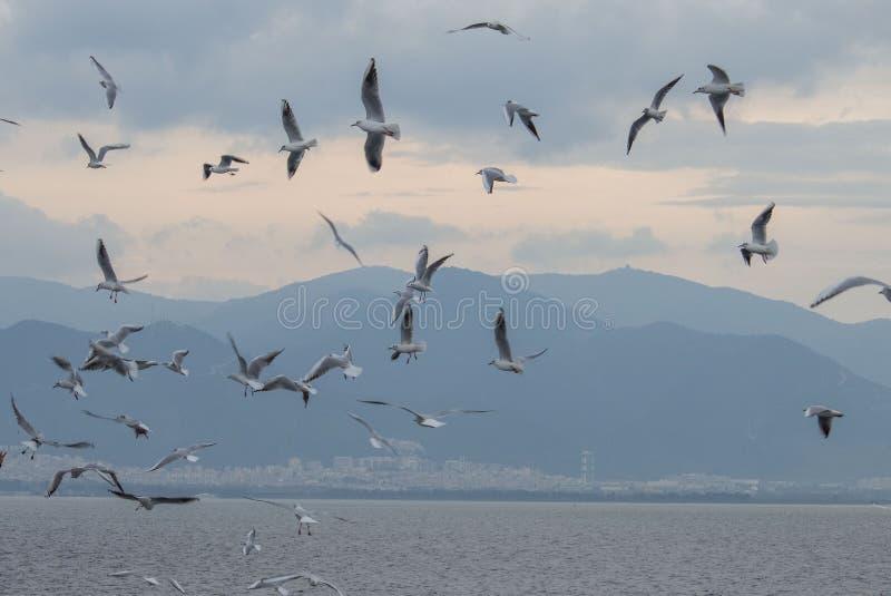 Himmel och Seagull arkivfoton