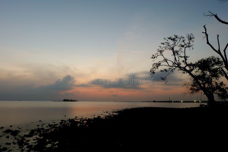 Himmel och träd arkivbild